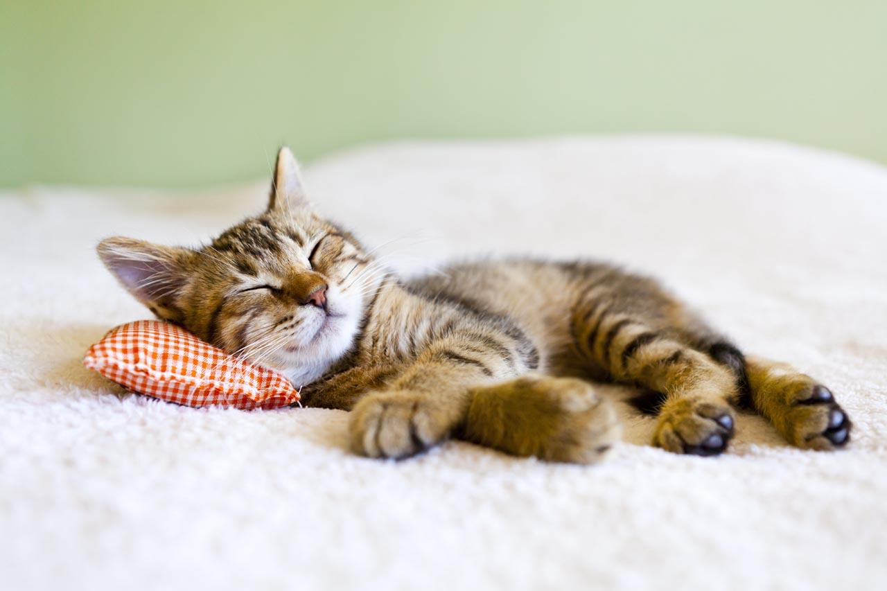 Small Kitty