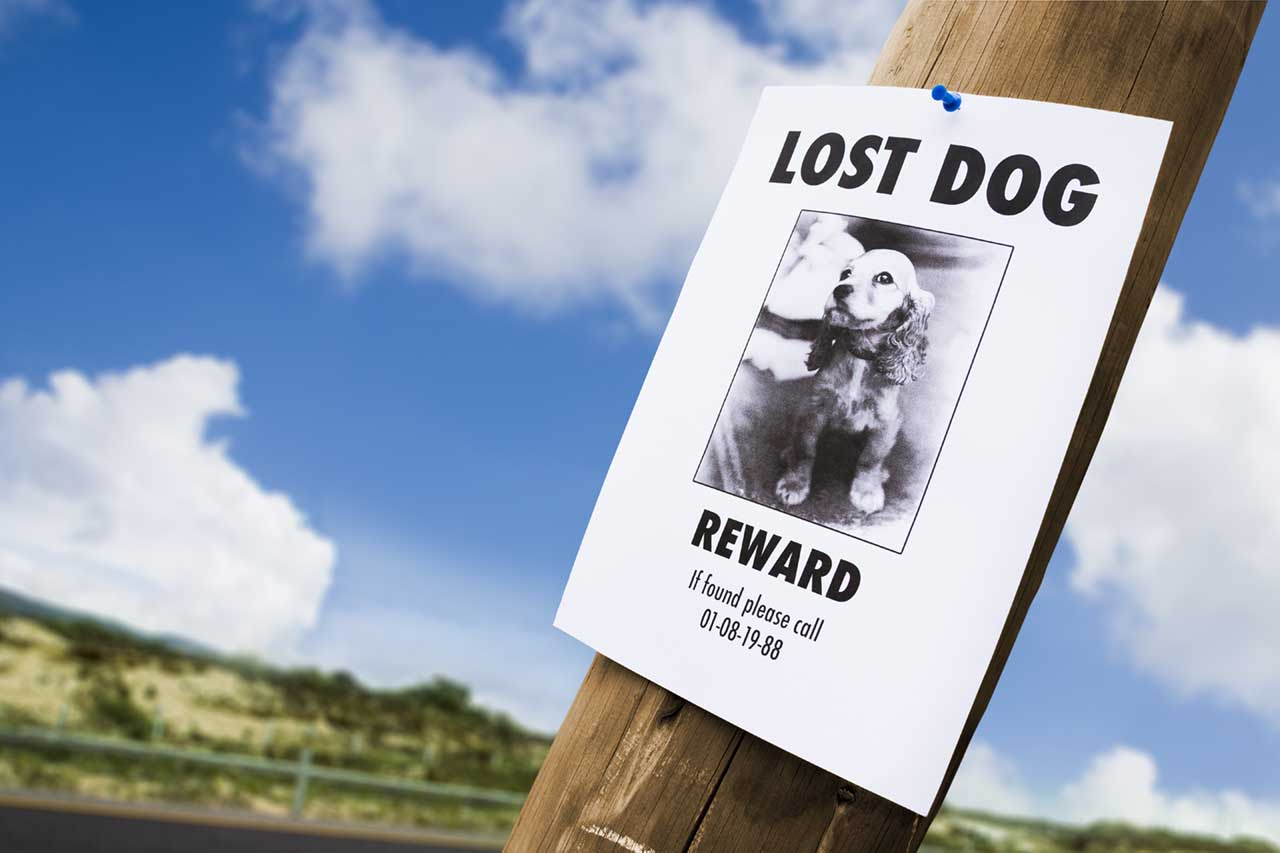 lost dog poster on lamp post