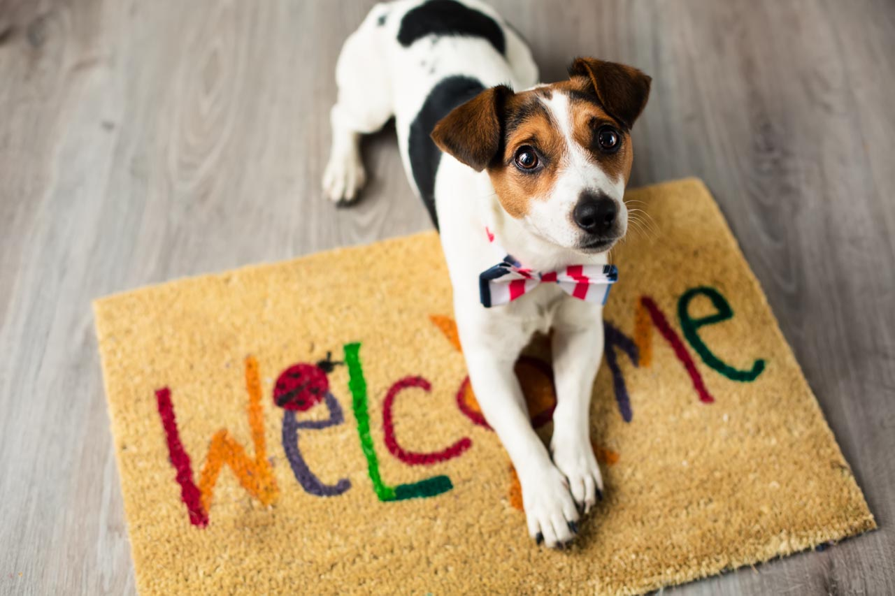 jack russell terrier on multi-colored welcome mat