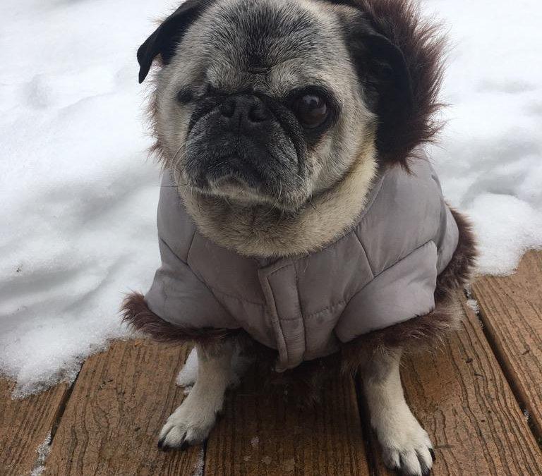 Rosie (February 2019)